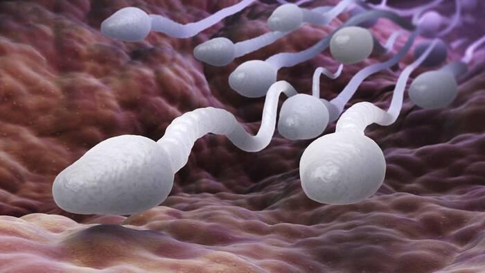 ADN circulante en sangre y semen: ¿marcador de infertilidad?