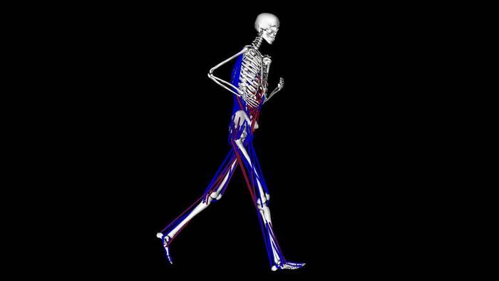 Músculos profundos, origen del dolor lumbar en corredores