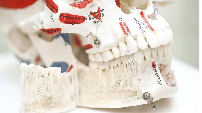 La protracción maxilar provoca cambios en la mandíbula