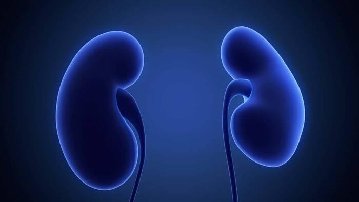 Estudian las implicaciones renales de la amiloidosis por gelsolina
