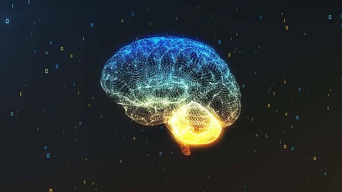 Daños cerebrales por fumigación contra el zika